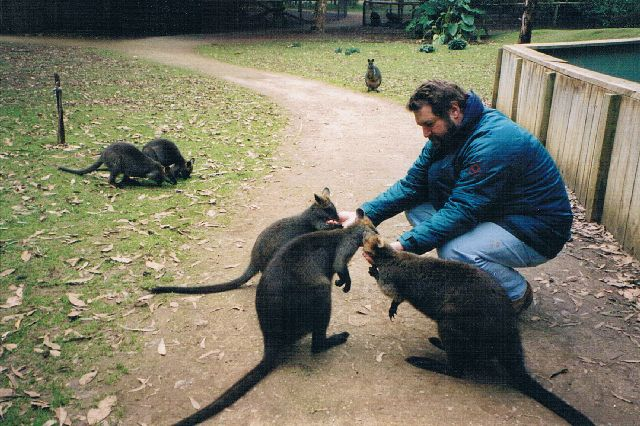 Australien Kängurus